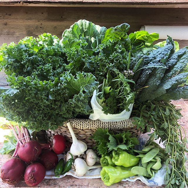 THE HEAT IS ON! So you're oven shouldn't be. We have all the fixins for a huge green salad and fresh green juices right here. Collards, kaels, chard, beets, cubanelle and jalapeño peppers, snow peas, fresh garlic, shiso and purslane PLUS a huge herb bouquet. ONLY DOING AM OR PM BASKETS DUE TO INTENSE HEAT 🔥🔥🔥 #lmgf #greenbasket #staycool
