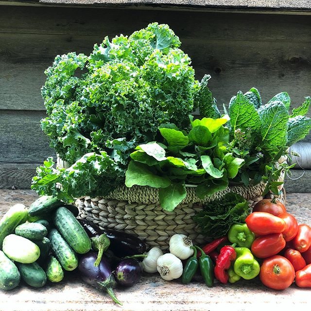 AUGUST BOUNTY 🥒🍅🙌🏻 This week's basket has some late summer favorites. Kales, spicy arugula, garlic, plenty of cukes, eggplants, cubanelle peppers, spicy peppers🌶, tomatoes(!), shiso and and herb bouquet! #hitusup #thisweeksbasket