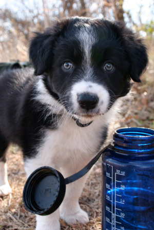 Pets and the planets puppy and water bottle.jpg