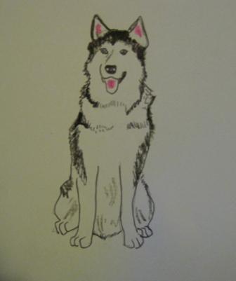Alaskan Malamute drawing.jpg
