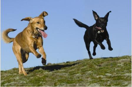 vaccinate dogs.JPG