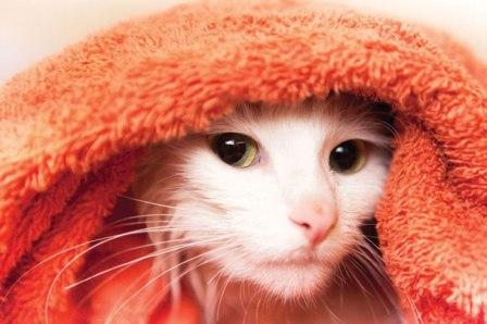 kittykitty_catBathTowelweb.jpg