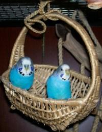 birds_twoblue.JPG