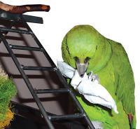 SpotMagazine_Dec2009_BirdToys_Pedro_paperTowel.jpg