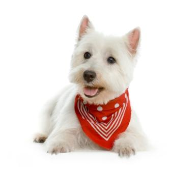 skin doc white dog.jpg