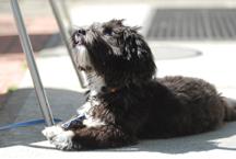 Good Dog pic1.jpg