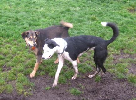 Dog Park dogs.jpg