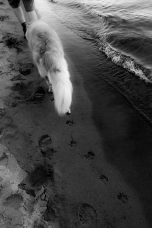 Trick of the Trade beach dog.jpg