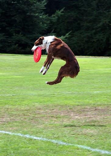 Flyball_Regionals 2009 331.jpg
