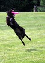 Flyball_Regionals 2009 294.jpg