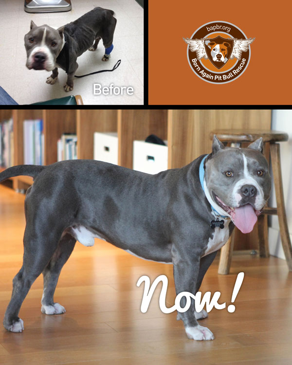 Before and After: Butter was rescued from a crowded shelter in L.A., returned to health and adopted into a loving family