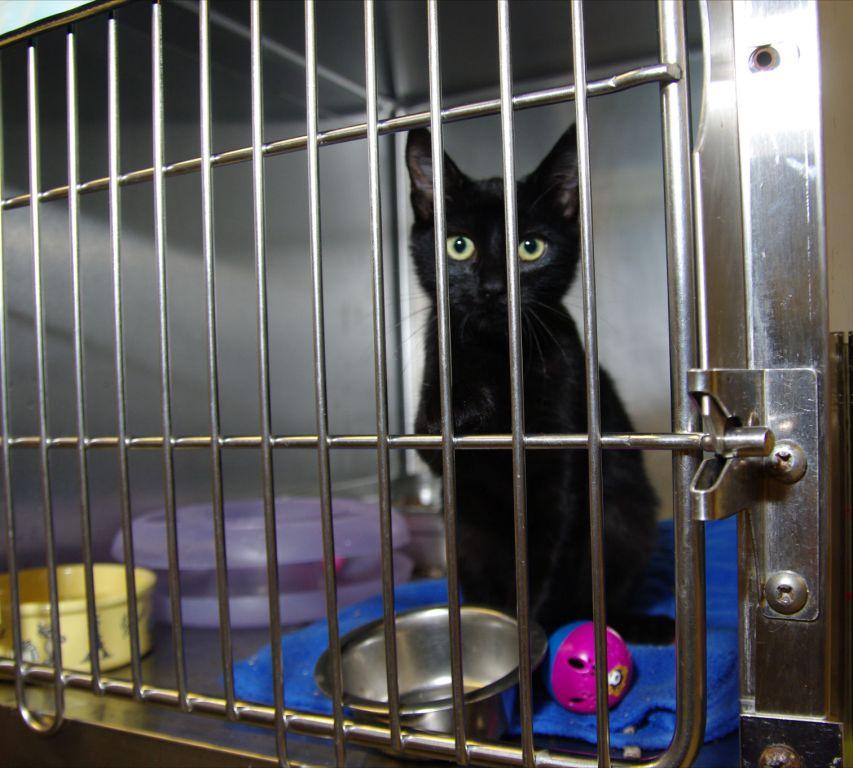 Kitten awaits new family at shelter