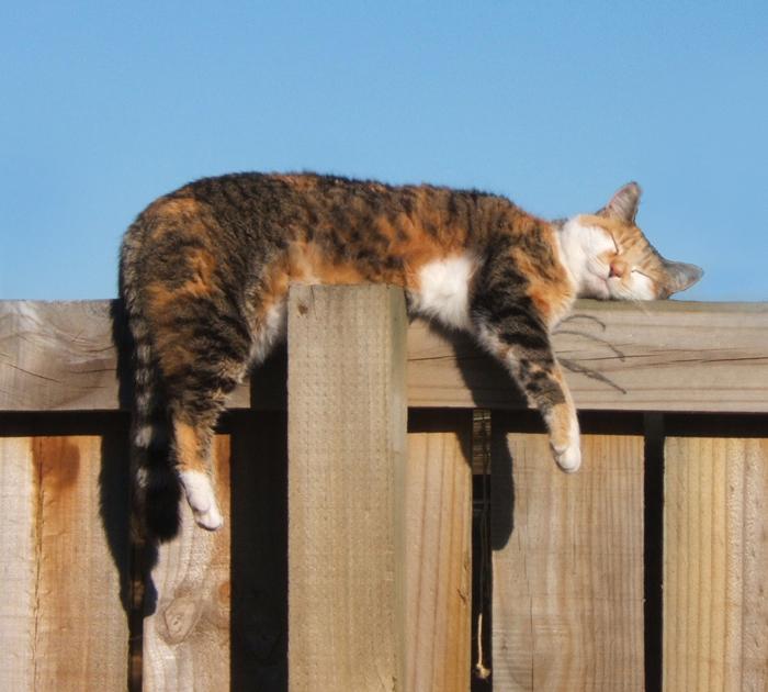 catFence.jpg