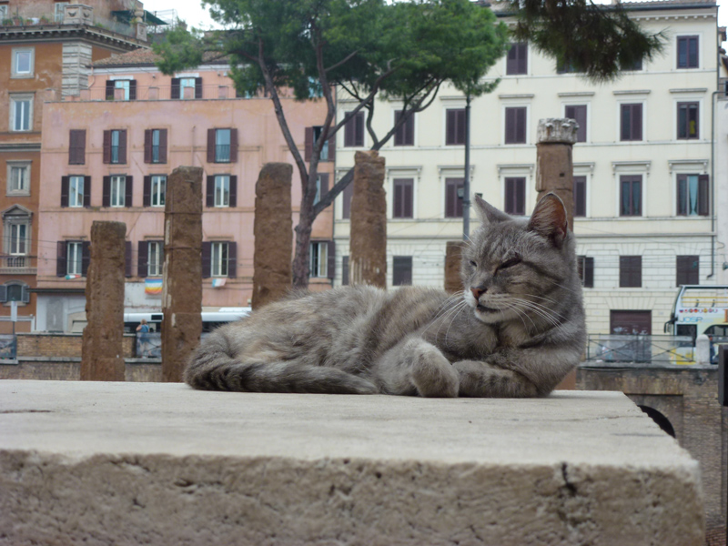 La Torre Argentina cat and columns 2.jpg