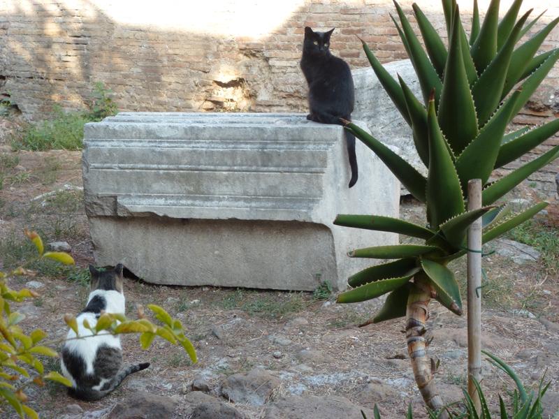 La Torre Argentina cats on ruins.jpg