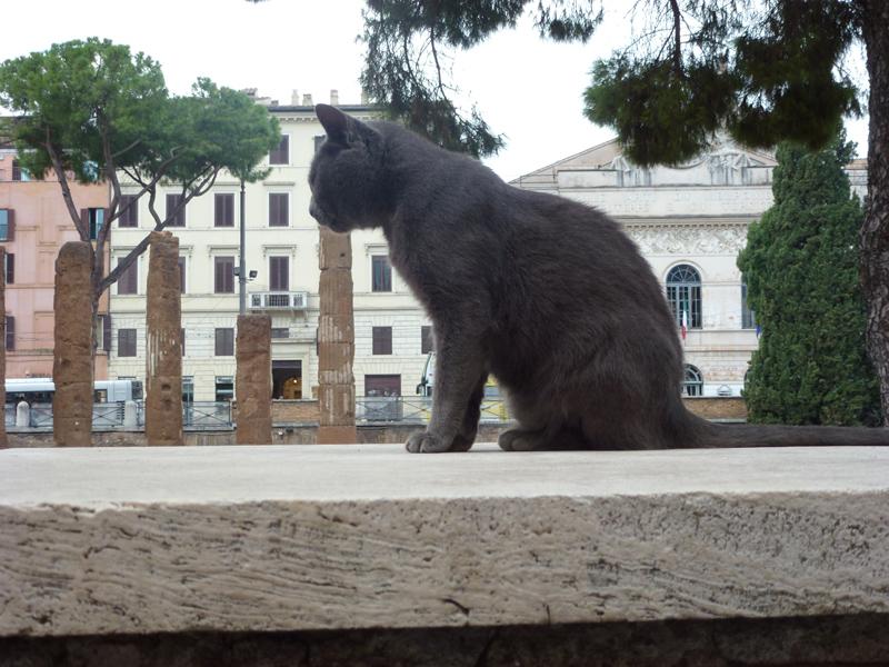 La Torre Argentina cat and columns.jpg
