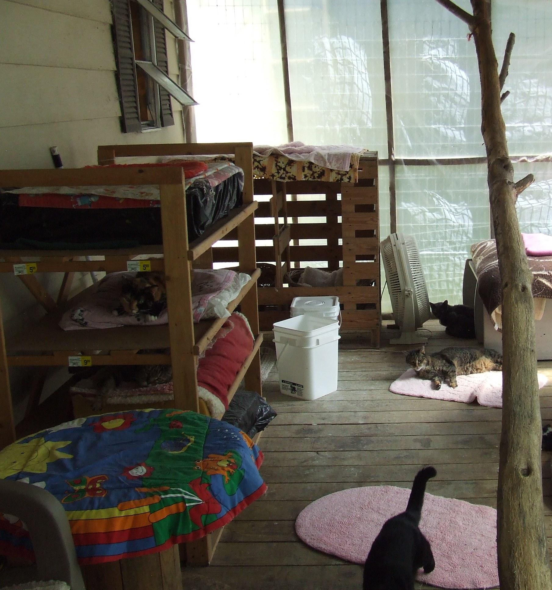 Catroom at Catnip Sanctuary