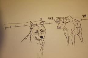 cattleDogDrawing.jpg