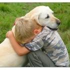 animal_empathy.jpg