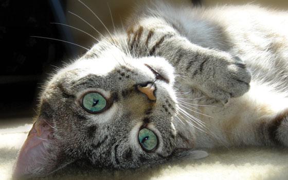 kityykitty_Cat_Rolling.jpg
