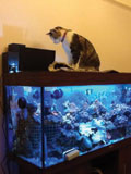 Photo-KittyKitty.jpg