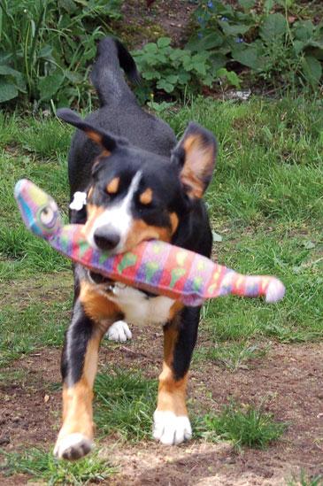 humping -puppy-playing.jpg