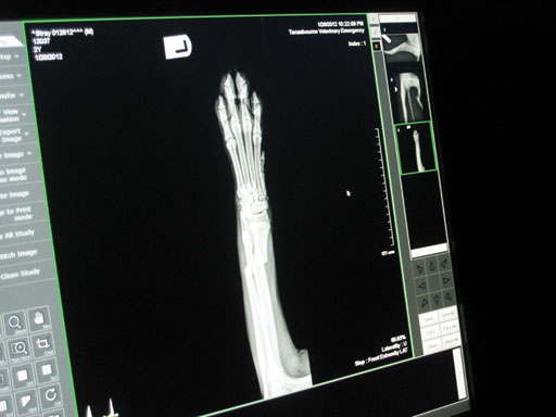 An x-ray showing Kipper's fractured front leg