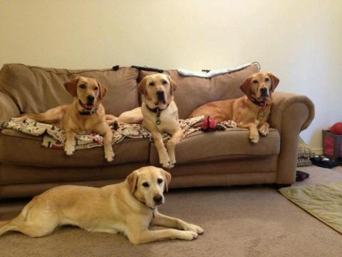 Lowe (in the middle) with his pack