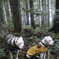 Muffinhead dogs