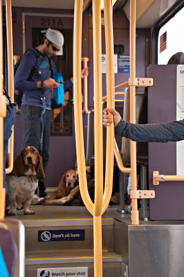 dogs_trimet.png
