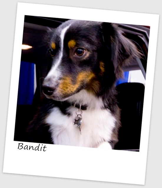 Bandit7 (427x640).jpg