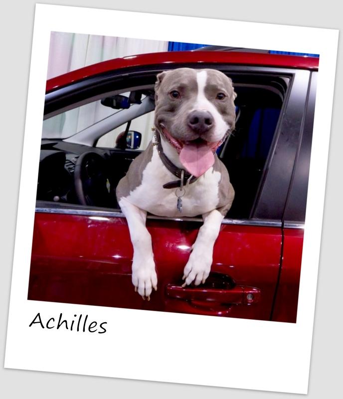 Achilles (625x640).jpg