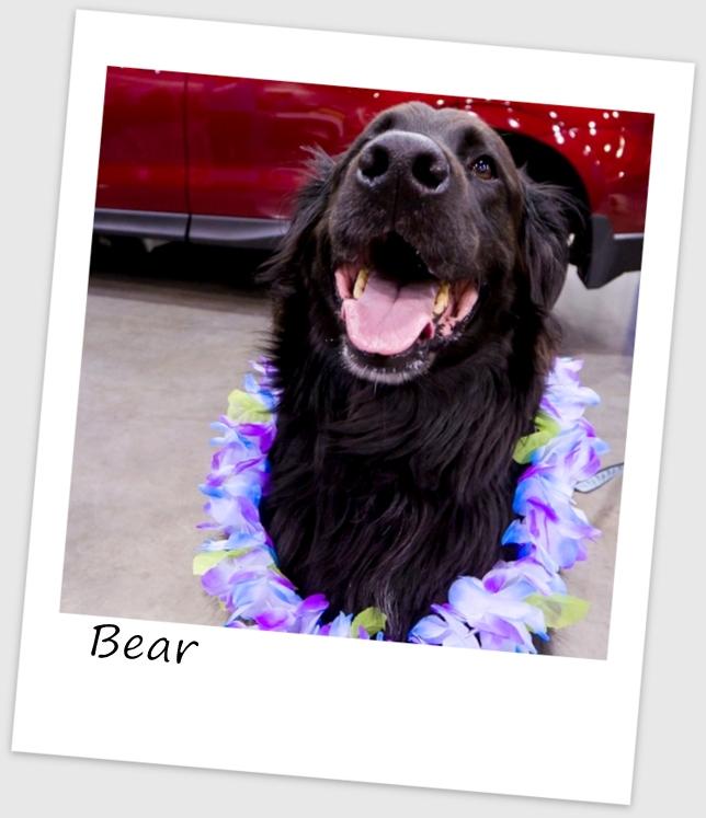 Bear (500x640).jpg