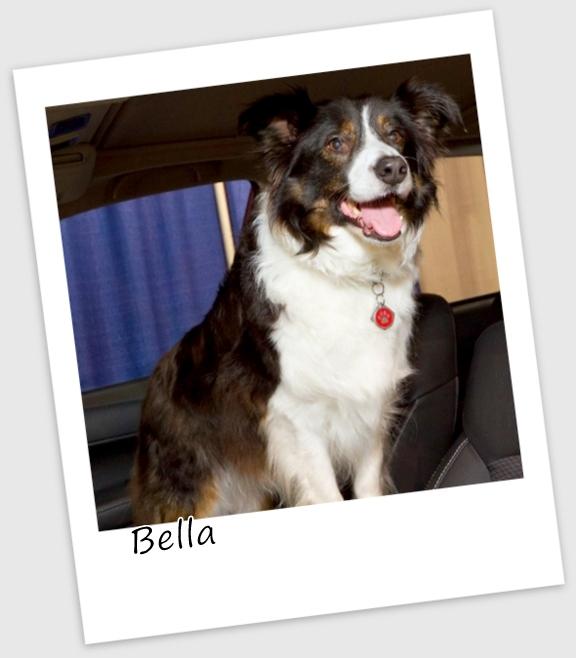 Bella5 (427x640).jpg