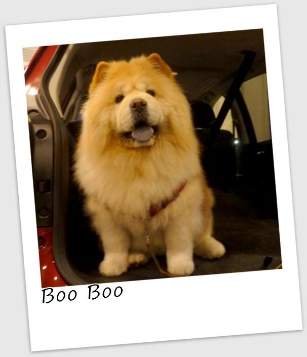 Boo Boo3 (537x640).jpg