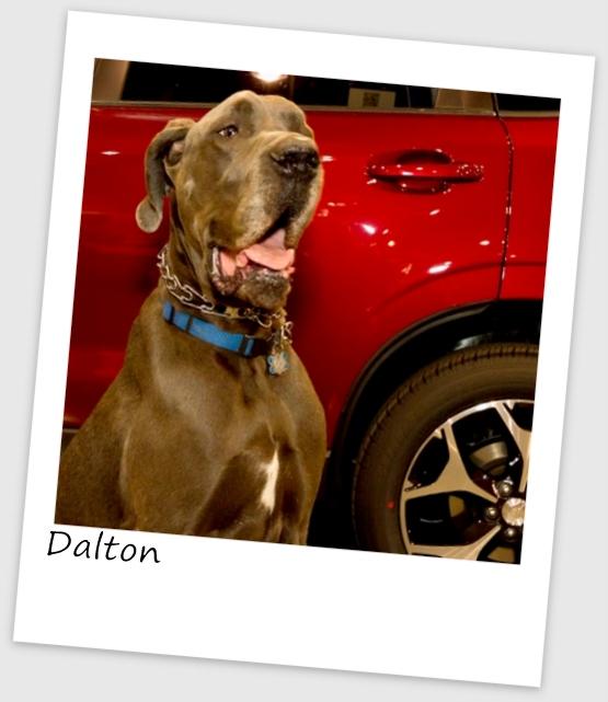 Dalton (427x640).jpg