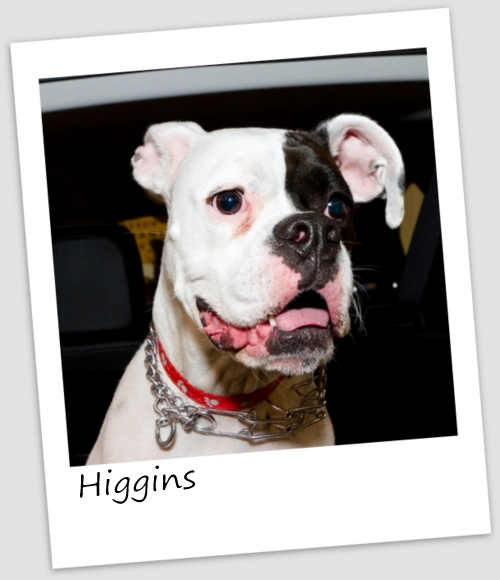 Higgins1 (427x640).jpg