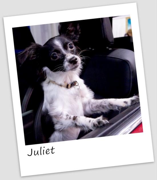 Juliet1 (640x427).jpg