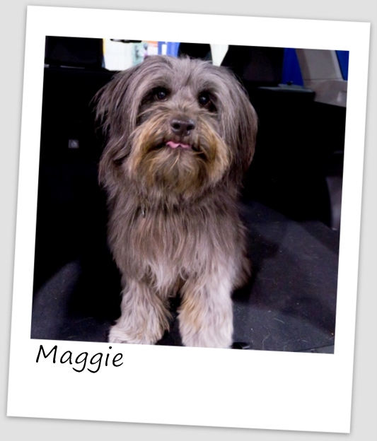 Maggie4 (427x640).jpg