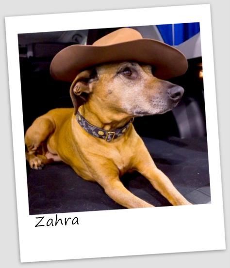 Zahra6 (427x640).jpg