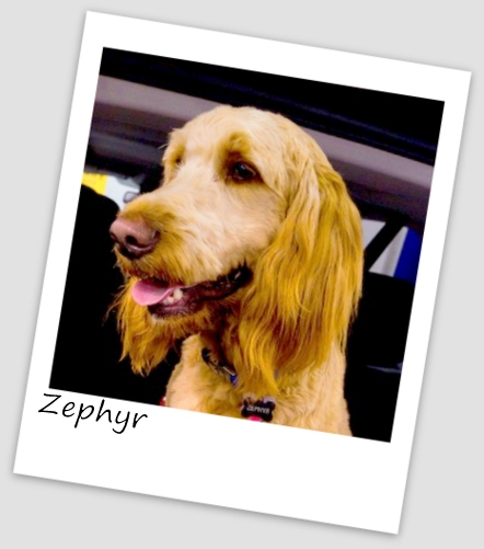 Zephyr5 (427x640).jpg