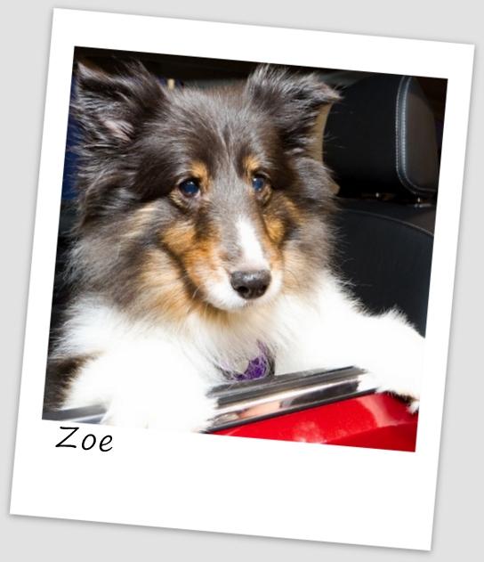 Zoe1 (427x640).jpg