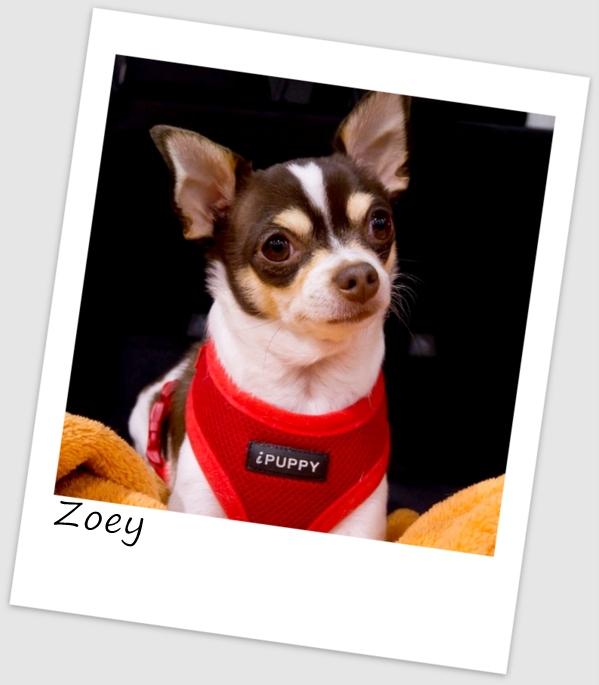 Zoey (460x640).jpg