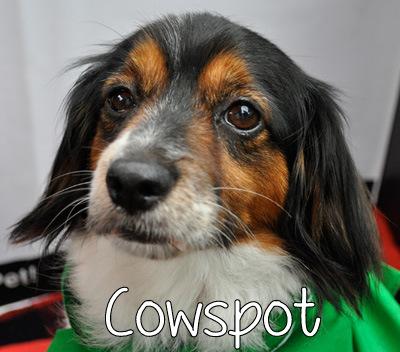 cowspot.jpg