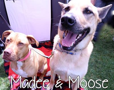 madee_moose.jpg