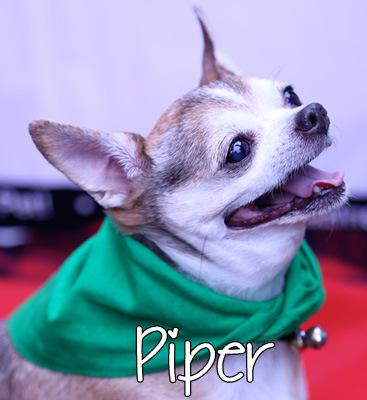 piper-2.jpg