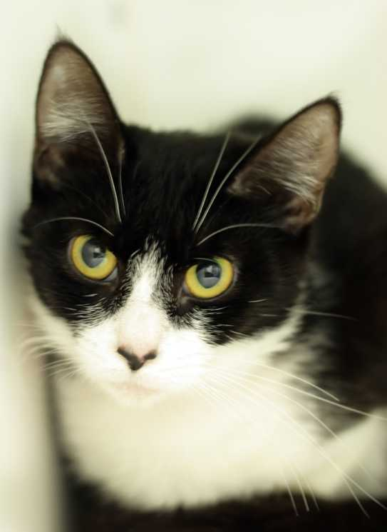 black-almost-cat.jpg