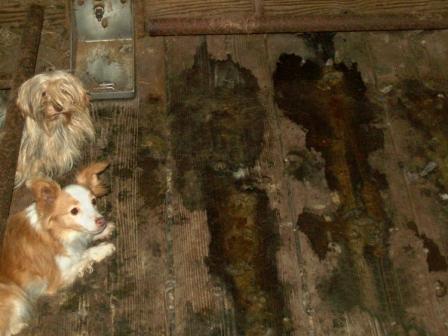 Fetch-PuppyMill.jpg