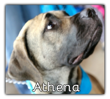 _Athena.jpg