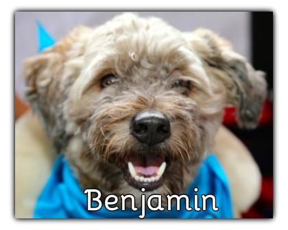 _Benjamin.jpg